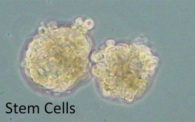 幹細胞護膚專題課程